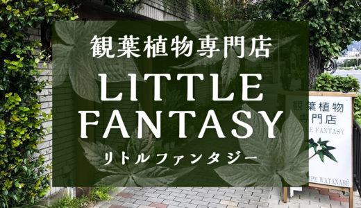 【観葉植物専門店】リトルファンタジーに行ってみた。京都でオススメの穏やかな雰囲気の観葉植物専門店